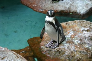 Penguin, Panda, and now EMD updates from Google make SEO a moving target. Photo by jennchick.